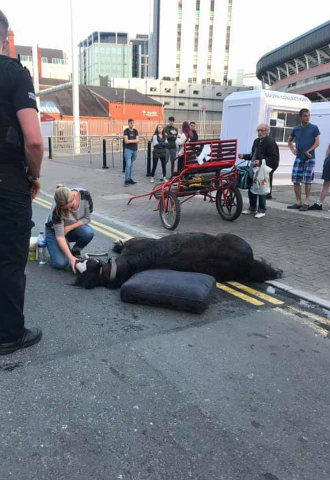 The horse in the middle of the street. Credit: Facebook/Jeanette L Cook
