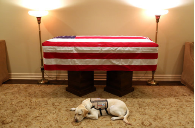 George HW Bush's Service Dog Sully Pays Respects To The Late President. Credit PA