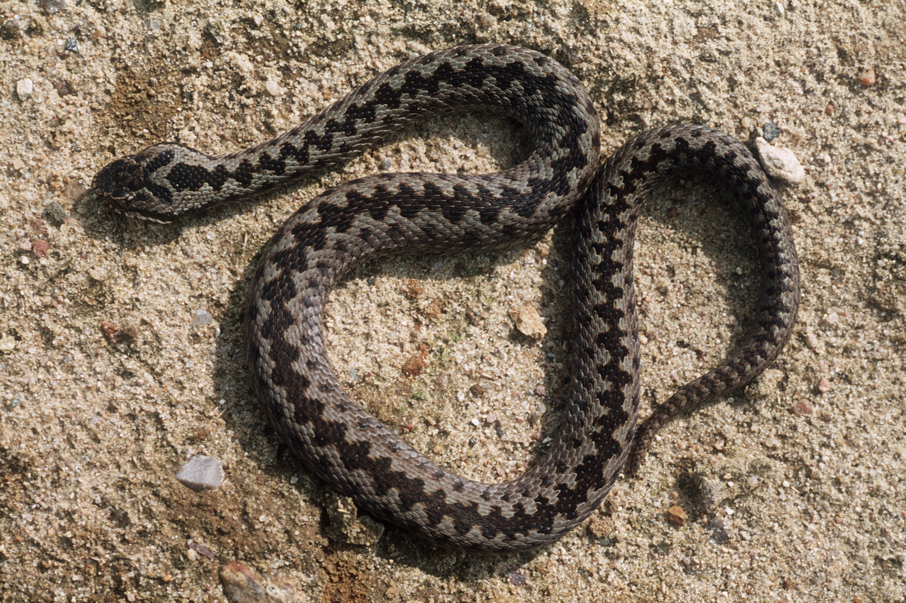 Snakes Are Invading UK Beaches And It's Ruined Beach Days Forever