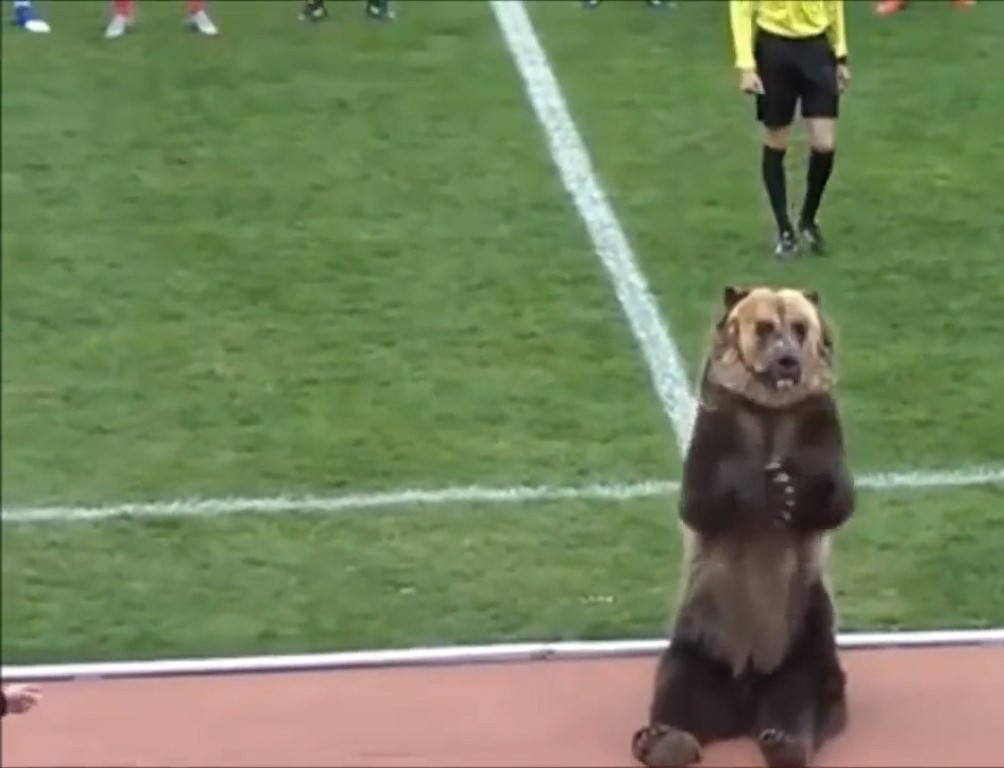 Bear forced to perform at Russian football match in 'cruel' act