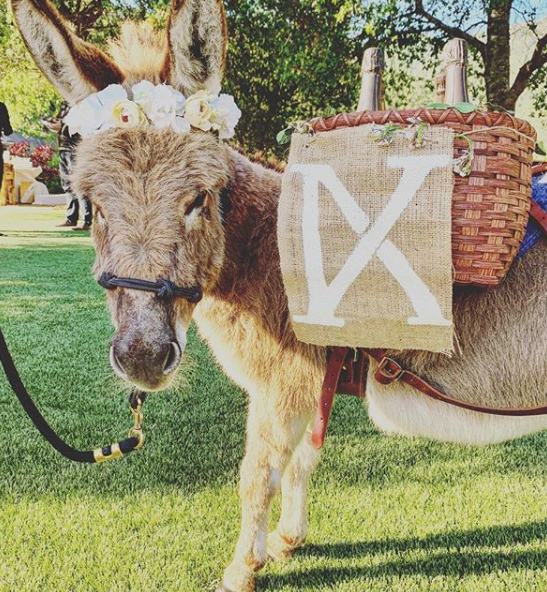 Company Hires Out Donkeys To Serve Guests Booze At Your Wedding