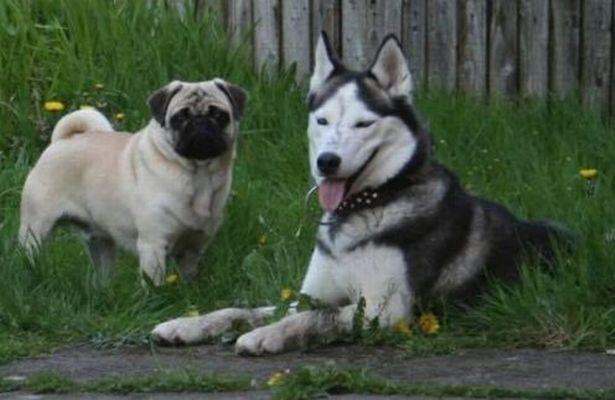 Buster and Luna. Credit: Alex Walton