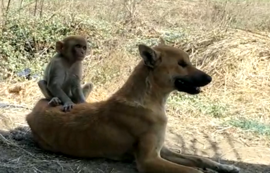 The dog and monkey are inseparable. Credit: Newsflare
