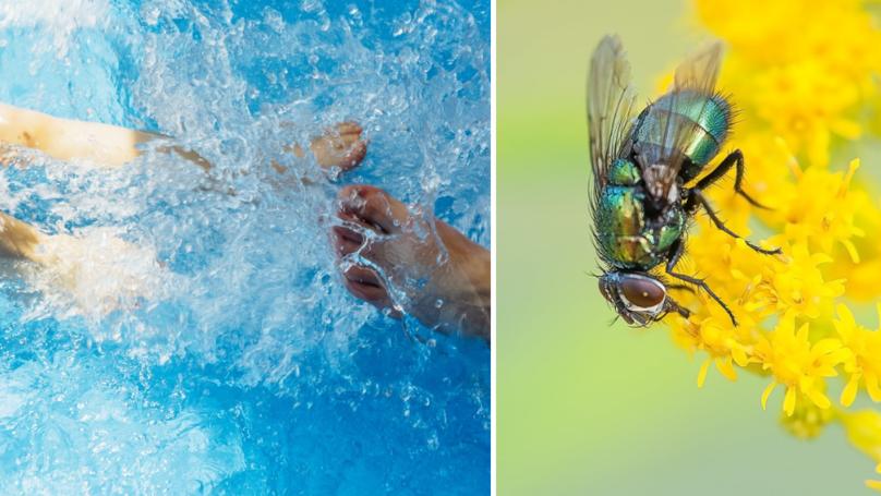 Parents Warned To Drain Paddling Pools To Stop Horseflies Breeding