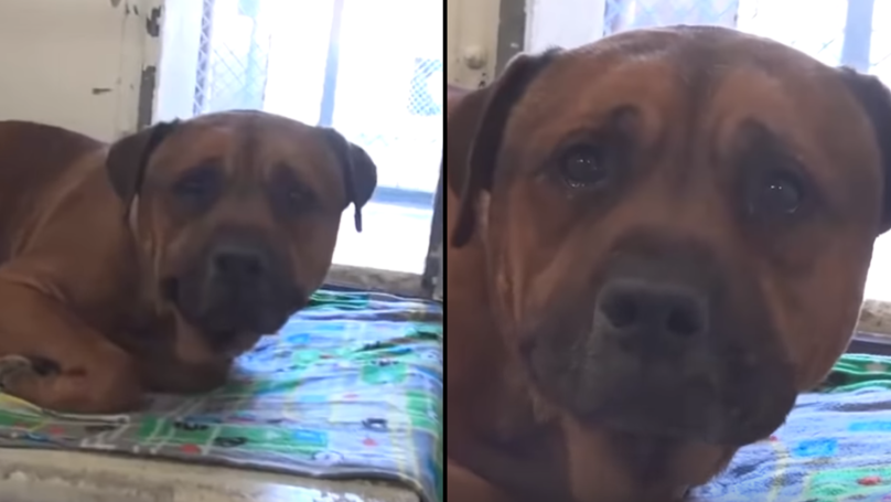 Heartbroken Dog Cries After Finding Out He's Been Abandoned