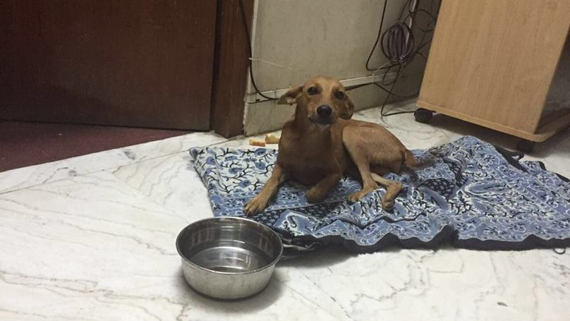 Dog Thrown From Roof Survives And Everything Just Feels So Much Better Now
