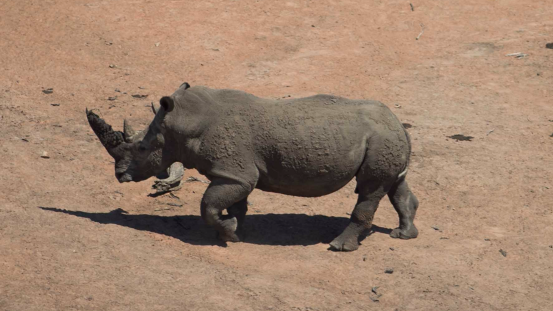 Driver Illustrates Why You Should Never Be Complacent Around Rhinos