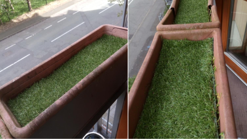 LAD Submits Astroturf Boxes To Chelsea Flower Show And Gets Amazing Response