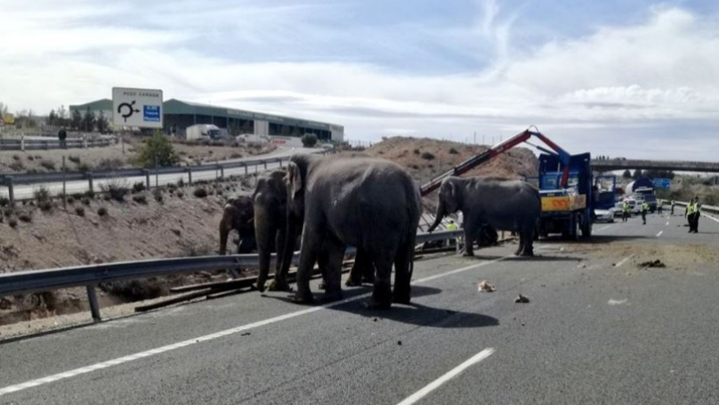 Circus Elephant Dies After Truck Carrying It Overturns In Spain