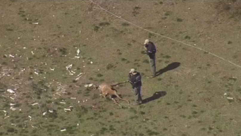 Twenty-Five Dead Horses Discovered At Maryland Farm Alongside Hundreds More Starving
