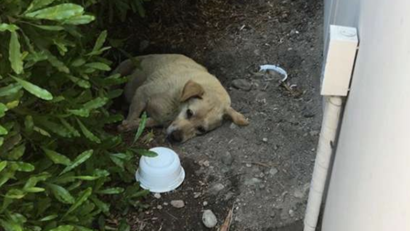 Dog Is Found Living In Dirt After Family Moved Away