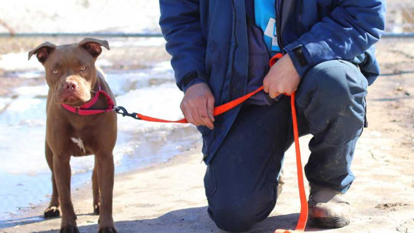 Volunteer Drives 1,400 Miles To Return Lost Dog, Only To Find Owner Doesn't Want Her