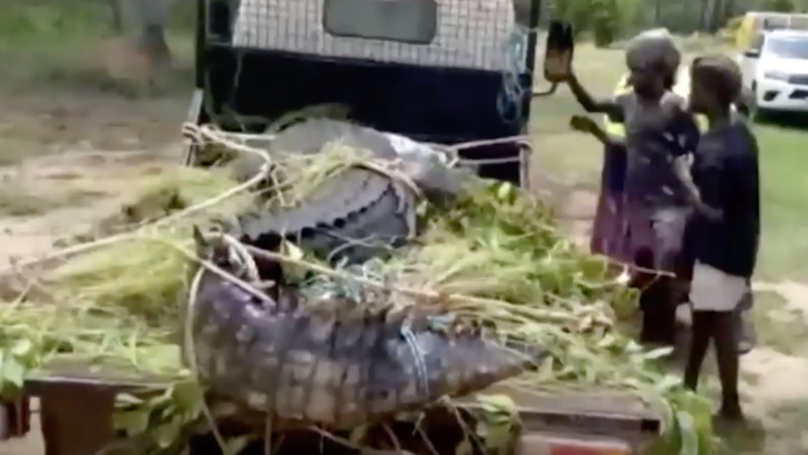 Aussie Cops Throw 600kg Croc Into Jail For Eating Dogs In Northern Territory