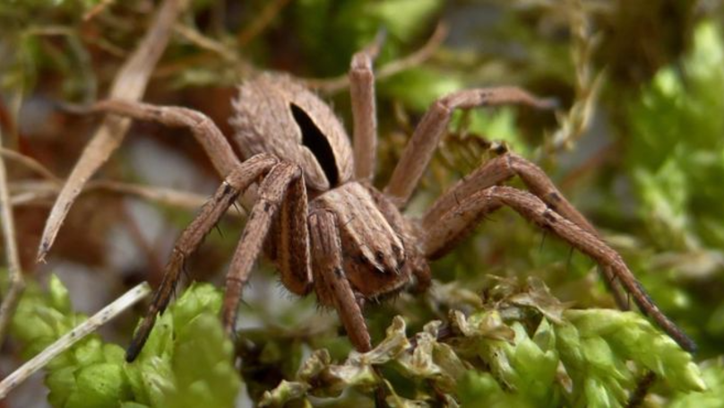 Spider Believed To Be Extinct Found In UK Park