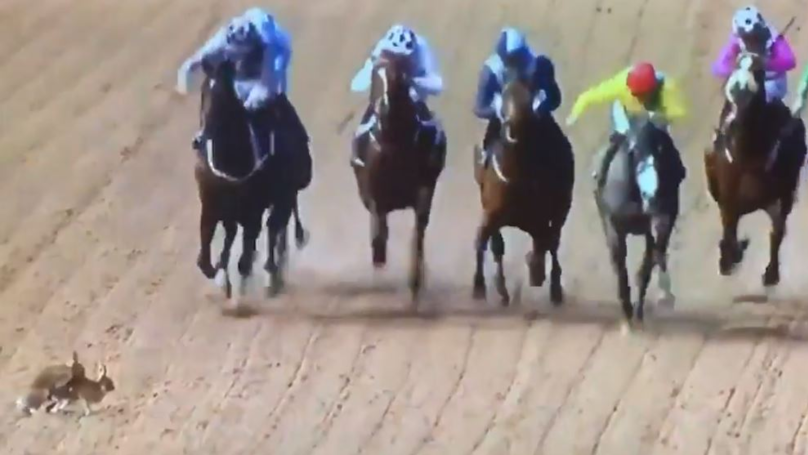 Moment Two Rabbits Were Interrupted Having Sex During Horse Race