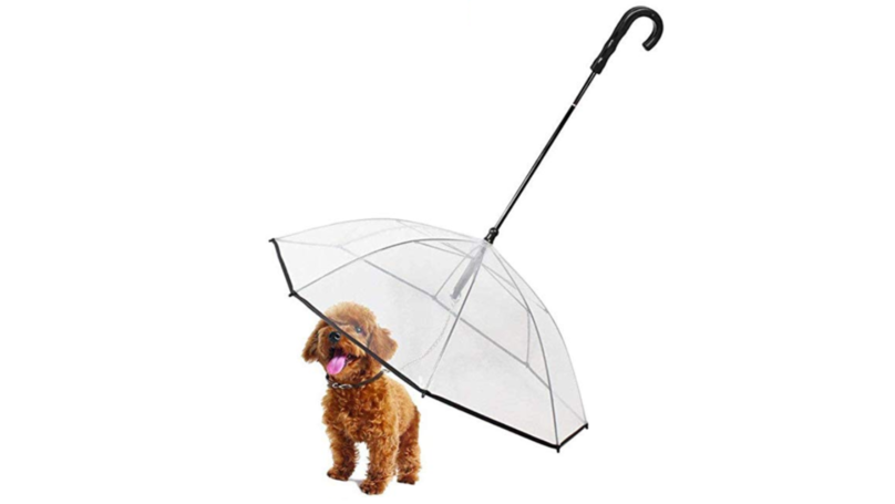 The One Accessory That'll Make Sure Your Dog Stays Dry on Rainy Days