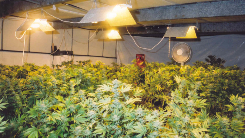 ​​Turns Out Snow Isn't Good For Anyone With A Cannabis Farm