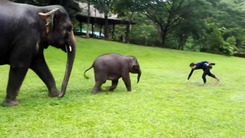 Baby Elephant Imitates Man Sliding In The Rain