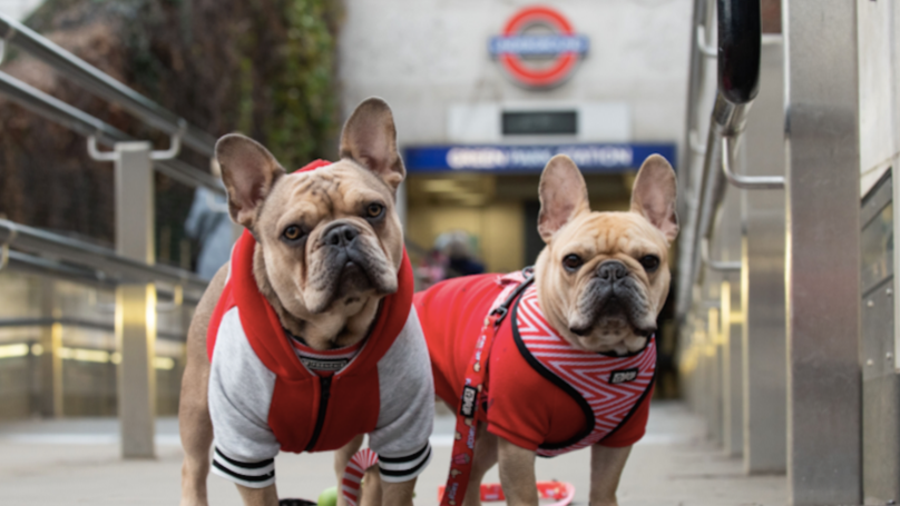 London Dog Week Is Happening This Month To Connect The Capital Through Their Love Of Dogs