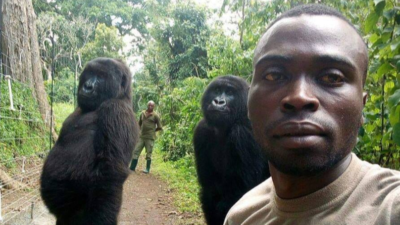 ​Gorillas Pose For Selfie With Anti Poaching Rangers