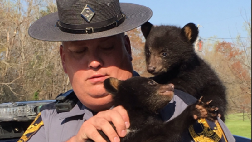 State Trooper Rescues Two Tiny Bears After Their Mother Is Killed