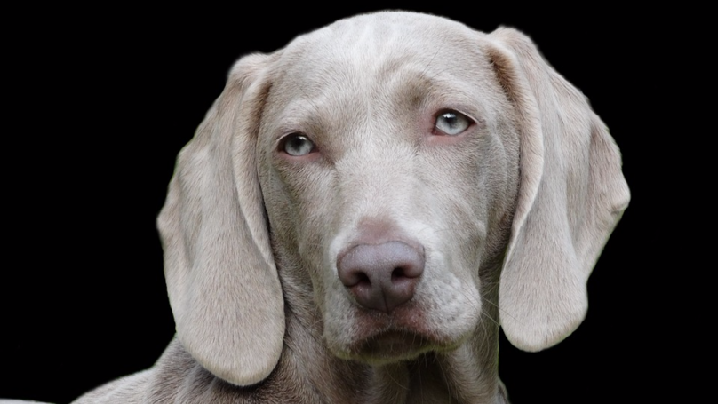 Science Confirms Pets Have Facial Expressions For Human