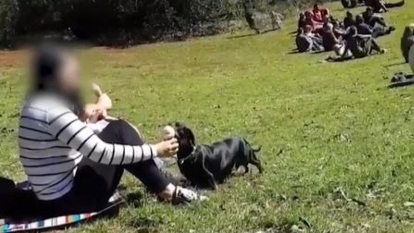 Woman Sharing Ice Cream With Dog Divides Opinion