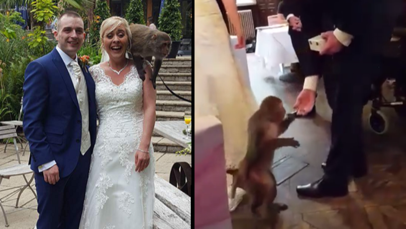 LAD Gets Monkey To Be Ring Bearer At His Wedding