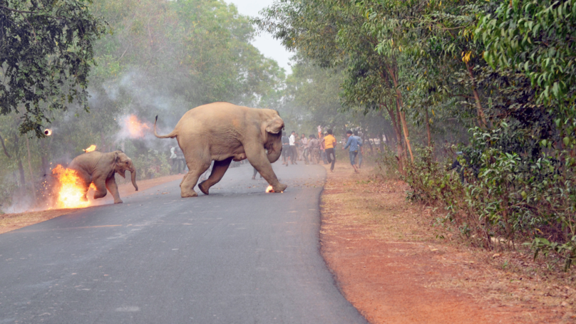 Disturbing Image Of Baby Elephant On Fire Wins Wildlife Photography Prize