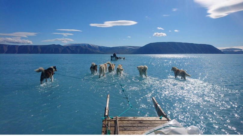 Photograph Of Dogs Walking Through Water Shows Reality Of Greenland's Melting Ice Sheet