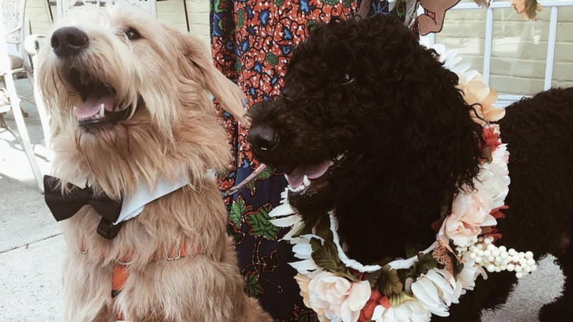 Two Pooches Tie The Knot In Adorable Dog Wedding Ceremony