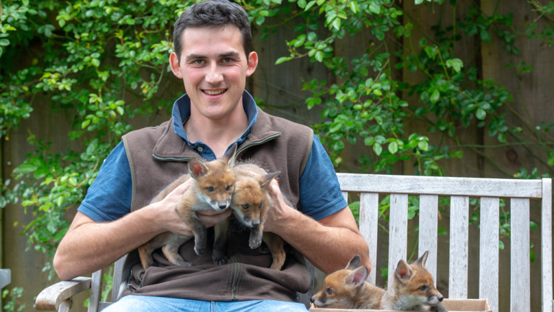 Man Saves Four Fox Cubs By Carrying Out Emergency C-Section