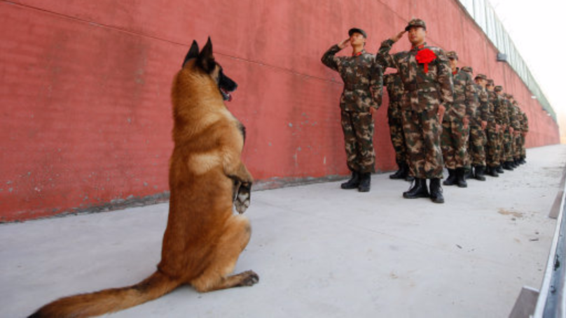 Army Dog Stands To 'Salute' As His Handler Retires From Duty