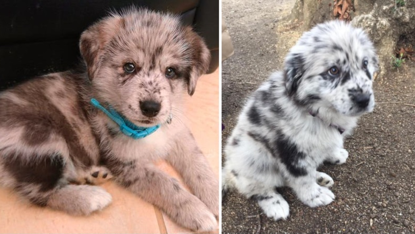 Reddit Users Are Sharing Pictures Of Their Adorable 'Oreo' Dogs