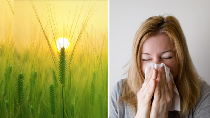 Pollen Count Reaches Highest In 10 Years Causing Hayfever Panic