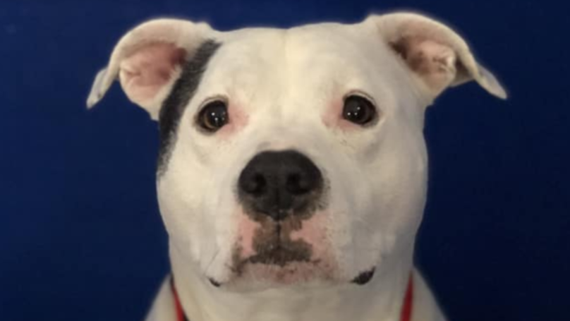 Shelter Seeks Home For Dog Who's Been There For 1,456 Days