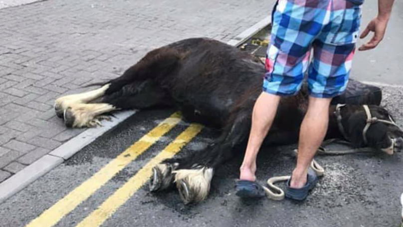 Horse Collapsed In Front Of Shocked Crowds After Spending 'Hours' In Heat
