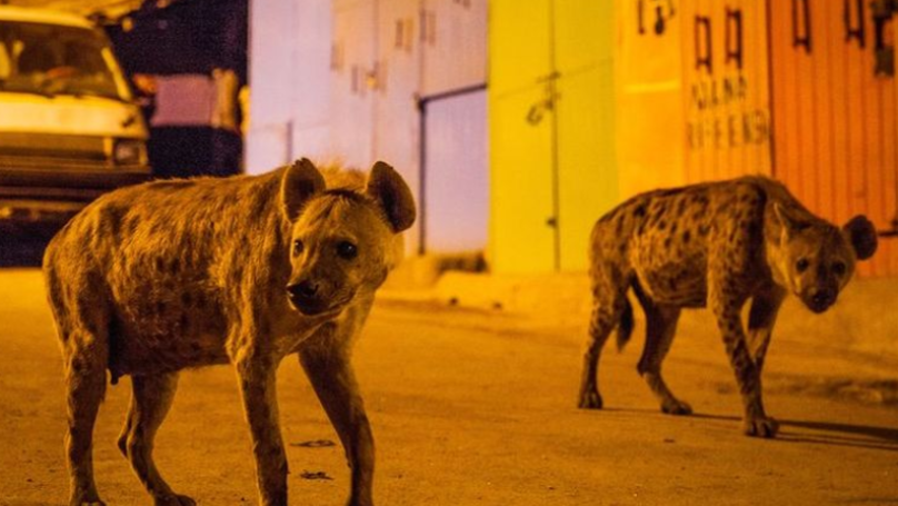 Twitter Reacts As Planet Earth 2's Finale Tops Off An Amazing Series