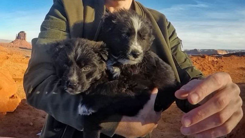 Adventurer Rescues Abandoned Dogs And Travels The US With Them