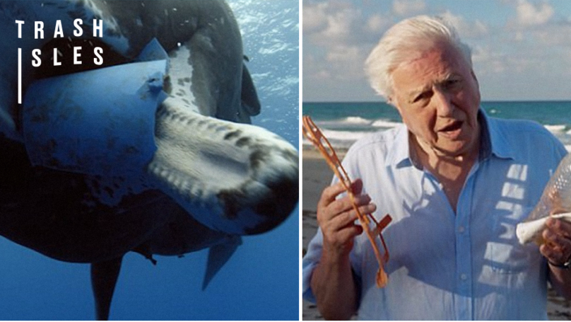 Oceans Under 'Biggest Threat in Human History', Warns Sir David Attenborough