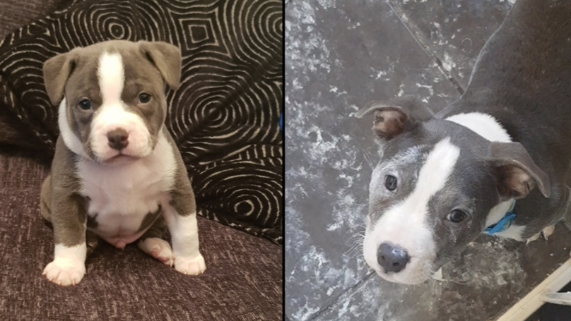 Owner Returns Home To Find 10-Week-Old Puppy Has Redecorated The Kitchen