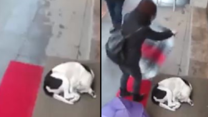 CCTV Captures Woman's Heartwarming Gesture For Cold, Stray Dog