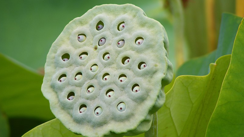 Trypophobia Isn't A Real Phobia According To American Psychiatric Association