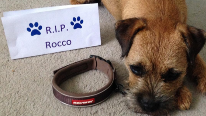 Dog Owners Are Removing Their Pets' Collars In Touching Tribute To Dead Dog
