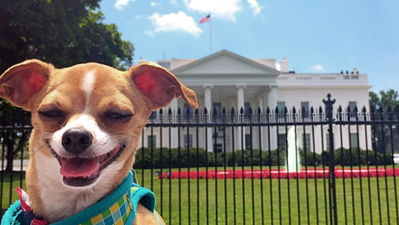 This Dog's Been Travelling The World And Documenting It All On Video