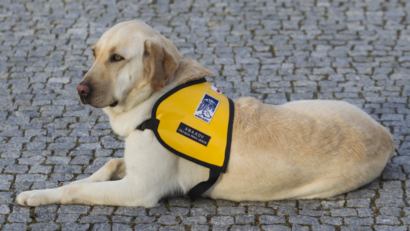 Woman's Shares Potentially Life-Saving Advice About Service Dogs