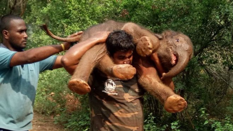An Indian Forest Guard Saved A Baby Elephant That Fell In A Ditch