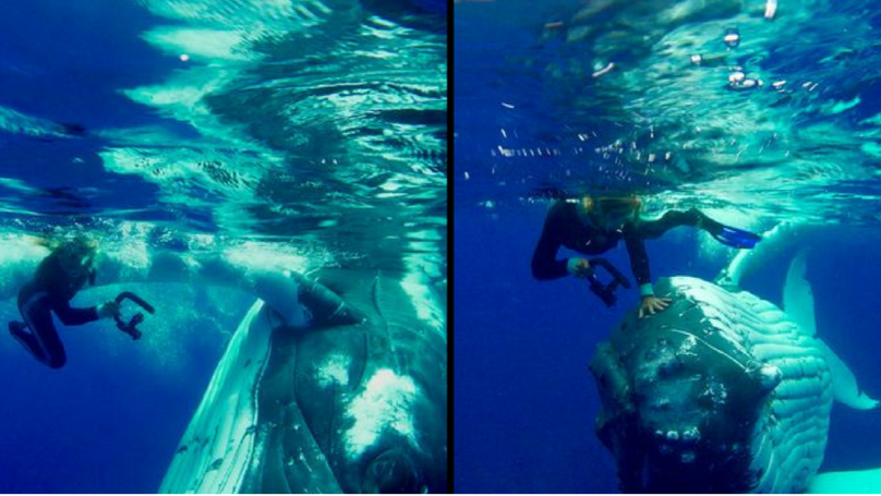 Tremendous Footage Shows Whale Give protection to Diver From Shark thumbnail