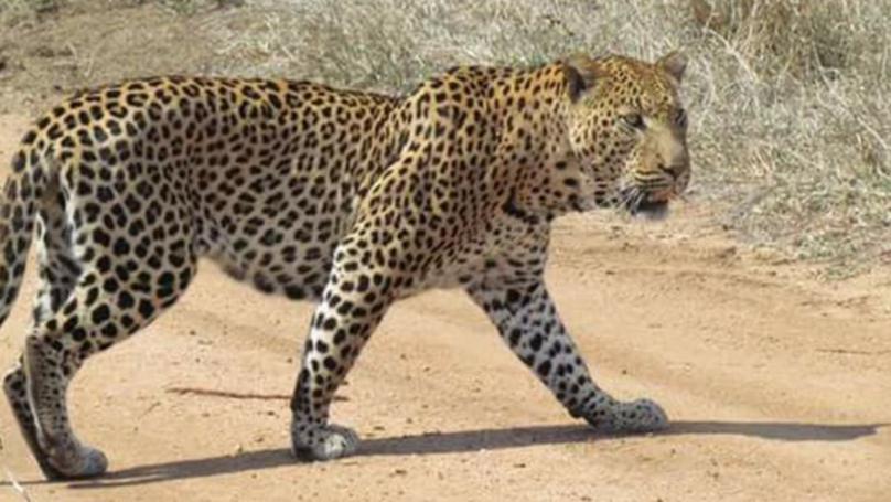 Toddler Eaten By Leopard In Ugandan National Park