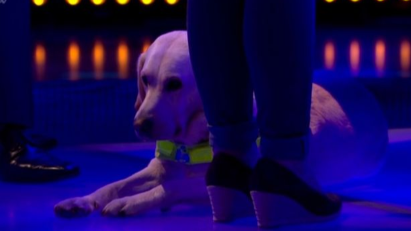 'The Chase' Viewers Gush Over Adorable Guide Dog Who Accompanies Contestant